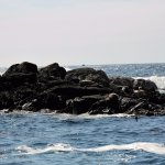 Harbour Seals enjoyign the sun