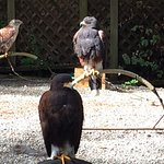 Photo de The Raptors