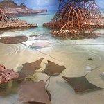 Photo de New England Aquarium