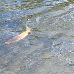 Fly fishing the North Platt and tributaries