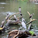 Photo of ARTIS Amsterdam Royal Zoo