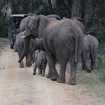 Herd of elephants with the youngest baby