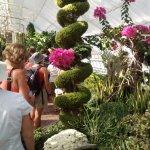 Greenhouse specimen