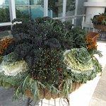 Amazing planters