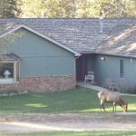 Elk on property