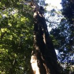Along treetops walk