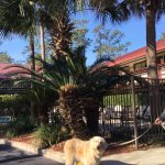Our dog loved her walks, sniffing all the trees around the Red Roof Inn.