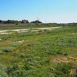 Borkums Naturschutzgebiet Greune Stee