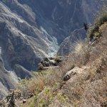 Profundidad del Cañón donde se ve el río Colca