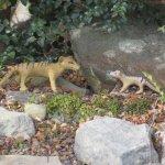 Find the hidden thylacines