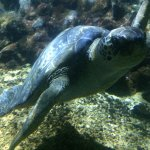 Photo of Aquarium du Cap d'Agde
