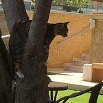 Local kitten. Just hanging around