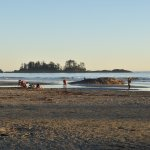 Chesterman's beach