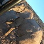 Sanbona Wildlife Reserve Foto