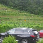 Parking next to vinyard.