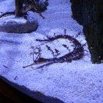 Mote Marine Laboratory and Aquarium Foto
