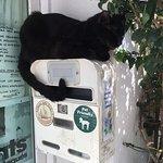 Los hermosos y adorables gatos, endémicos en Cadaqués, y cerca del local