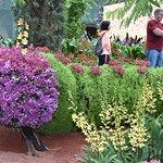 Kleurige bloemenpracht in de Flower Dome