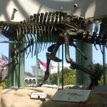 NOT a T Rex.