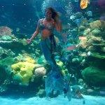 Aquarium at Silverton with Mermaid