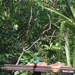 Photo of Itamambuca Eco Resort