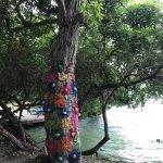 Photo of Coralina Island