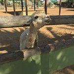 Foto de Philip's Animal Garden