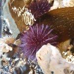 More beautiful urchins