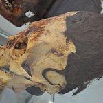aracas History Museum - Juan Navarro Hierro