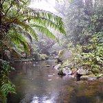 One of the many mountain streams that run through Pukeiti.