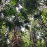 Sarasota Jungle Gardens Foto