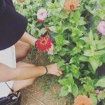 Foto de Sweet Berry Farm