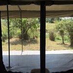 Porini Lion Camp 사진