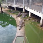 Photo of Million Years Stone Park & Pattaya Crocodile Farm