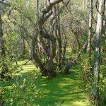 Foto di Conservation Park