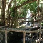 Xanadu garden.