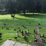 Foto de Hengar Manor Country Park