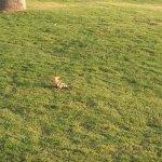 Photo de IBEROSTAR Lanzarote Park