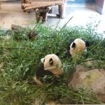 Photo of Toronto Zoo