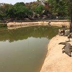 Crocodile lagoon
