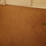 Look at the state of this carpet. My bare feet never touched it once,