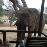 This elephant was outside our room one morning.