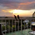 Zdjęcie Noosa Hill Resort