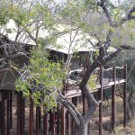 Photo of Kapama Buffalo Camp