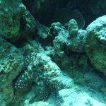 Oktopus am Blue Hole