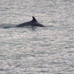 Bild från SeaMor Dolphin Watching Boat Trips