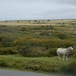 Typical views on Dartmoor from electric bike tour