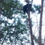Sieste dans les arbres