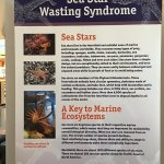 Learn about sea star wasting syndrome