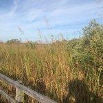 Sunday at BBNWR bayside trail
